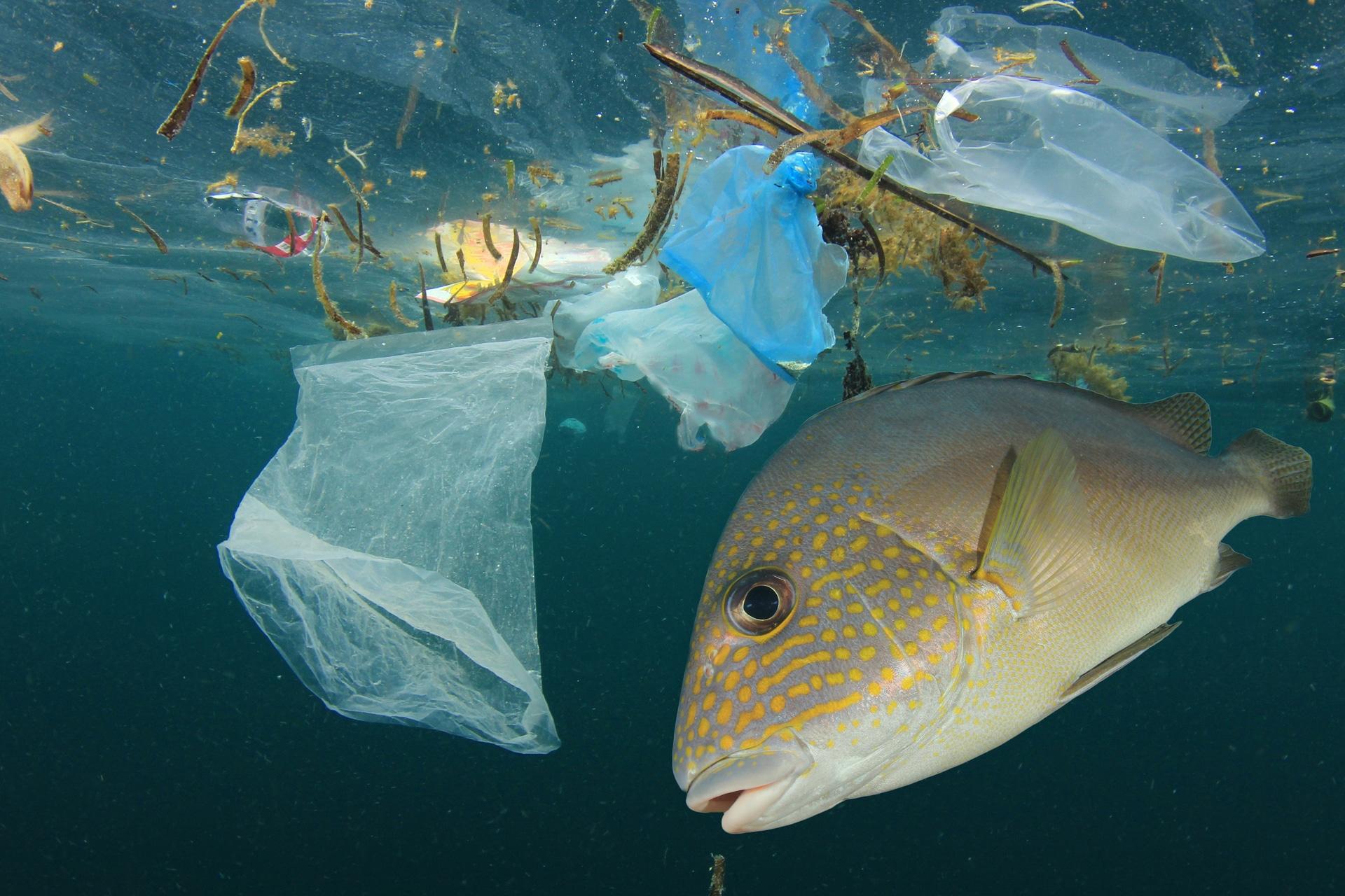 Rifiuti di plastica 103 le tonnellate raccolte per ripulire l'Oceano Pacifico